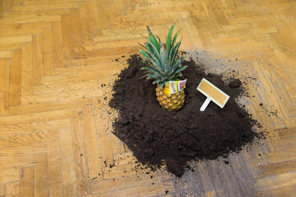 Ananas trift Heimaterde von Romana Dorant